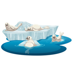 isolated picture white seals vector image