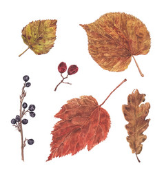 Watercolor autumn fall dry leaf and berry set vector