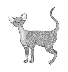 cornish rex icon in monochrome style isolated on vector image