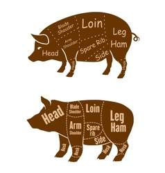 Meaty pigs with butchery cuts vector image
