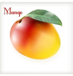 Ripe mango on the white vector image vector image