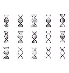 dna model elements chemistry spiral chromosome vector image