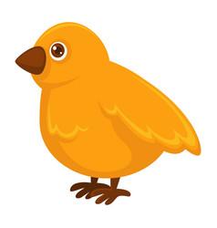 Little fluffy yellow chicken with small sharp beak vector