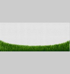realistic grass border green herb lawn garden vector image