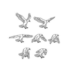 bald eagle flying drawing collection set vector image