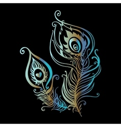 beautiful peacock feathers vector image