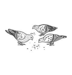 Pigeons peck seeds sketch vector