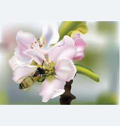 cherry flowers realistic with vector image