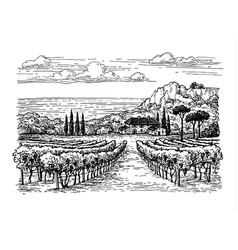 hand drawn vineyard landscape vector image vector image