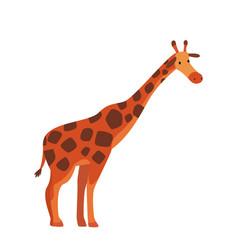 Cute giraffe jungle animal side view african vector