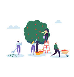 farmer woman pick apple tree harvest with ladder vector image