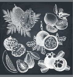 hand drawn tropical fruits collection vector image