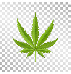 hemp leaf isolated on transparent background vector image