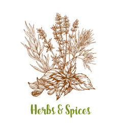 Herbs and herbal spices sketch vector