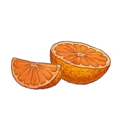 Juicy orange on a white background vector