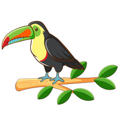 toucan on white background vector image