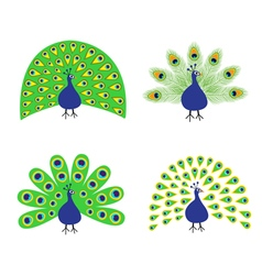 Peacock set Feather out open tail Beautiful Exotic vector image