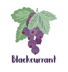 Blackcurrant forest berry vector