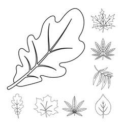 design of vegan and organic icon vector image