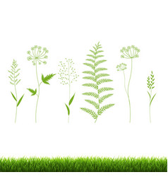 Green grass set isolated white background vector