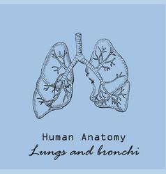 Handdrawn human lungs vector