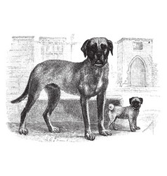 Mastiff and pug vintage vector