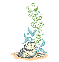 Sea shells algae hand drawn sketch style vector