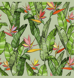 seamless pattern with strelitzia bird paradise vector image
