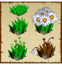 Stages growth daisies planting and withering vector
