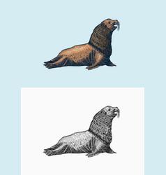 Steller sea lion marine creatures nautical anima vector
