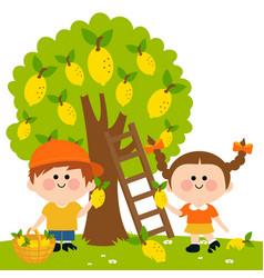 children picking lemons under a lemon tree vector image