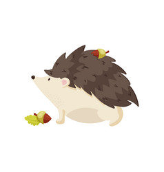 Cute hedgehog carries acorn on his back with vector