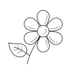 Daisy flower line icon vector