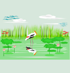 painted stork are walking in the water vector image