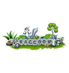 raccoon is playing together in garden vector image