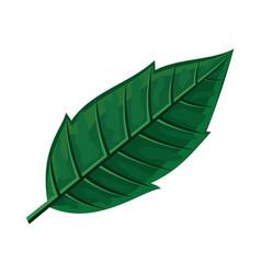 green leaf in flat design vector image