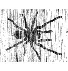 Grunge tarantula vector