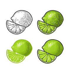 Lime whole and slice vintage engraving vector