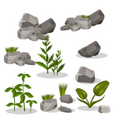 Plants and stones vector