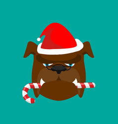 santa dog and candy cane christmas home pet xmas vector image