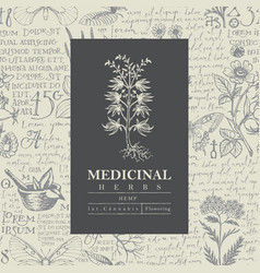 Beautiful label or banner for hemp plant vector