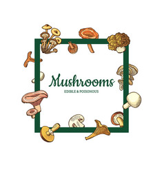 hand drawn mushrooms menu text frame vector image