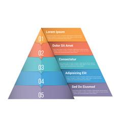 pyramid infographics vector image