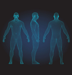 set of 3d wire frame human body vector image