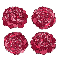 set of beautiful flower isolated on white vector image