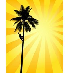 sun palm vector image vector image