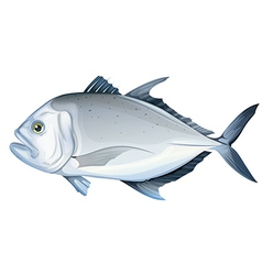 Giant trevally vector image