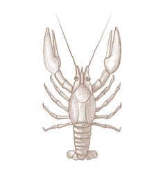 lobster hand drawn sketch vector image