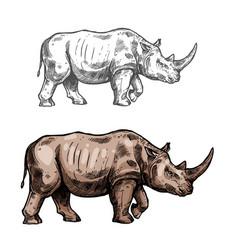 Rhinoceros sketch wild animal icon vector