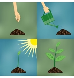 Planting process in flat design vector